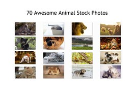 Animal Stock Photos 70 High Quality Awesome Images 300 DPI Print or Web - $70.00