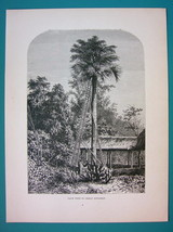 INDIA Palm Tree in Great Andaman - 1866 Antique Print  - $16.20