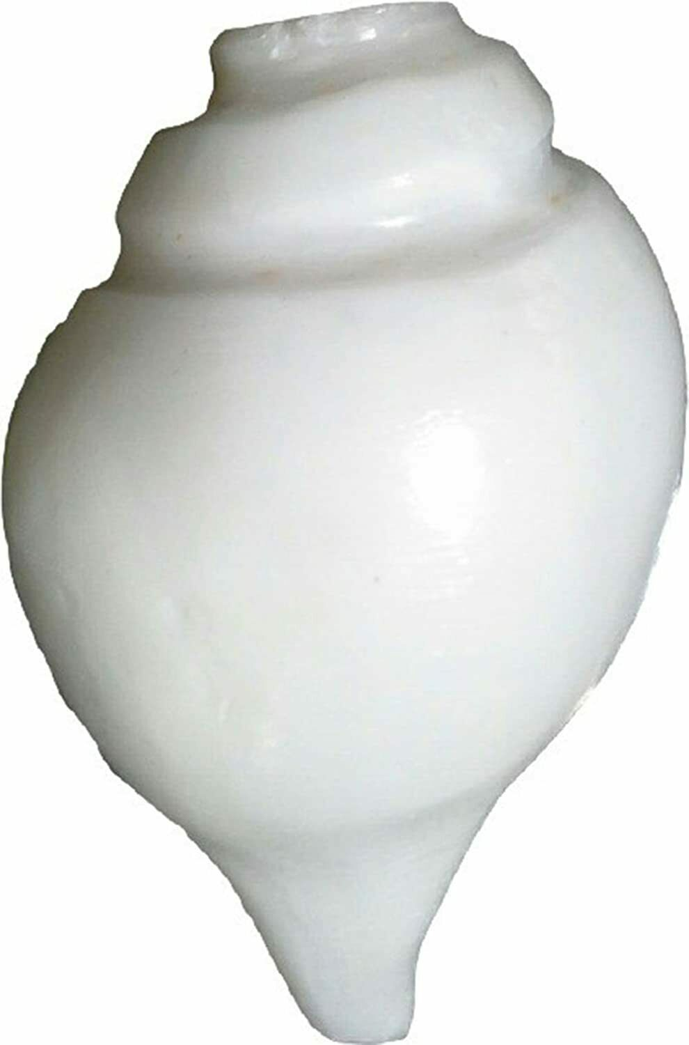 Primary image for Pooja Shankh Loud Blowing Vamavarti Shankh White Conch Shell 4 Inches Free Ship