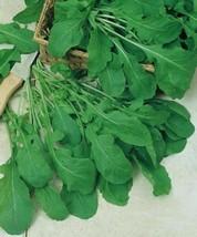 500 Organic Arugula Seeds Heirloom Herb Combined Shipping - $1.79