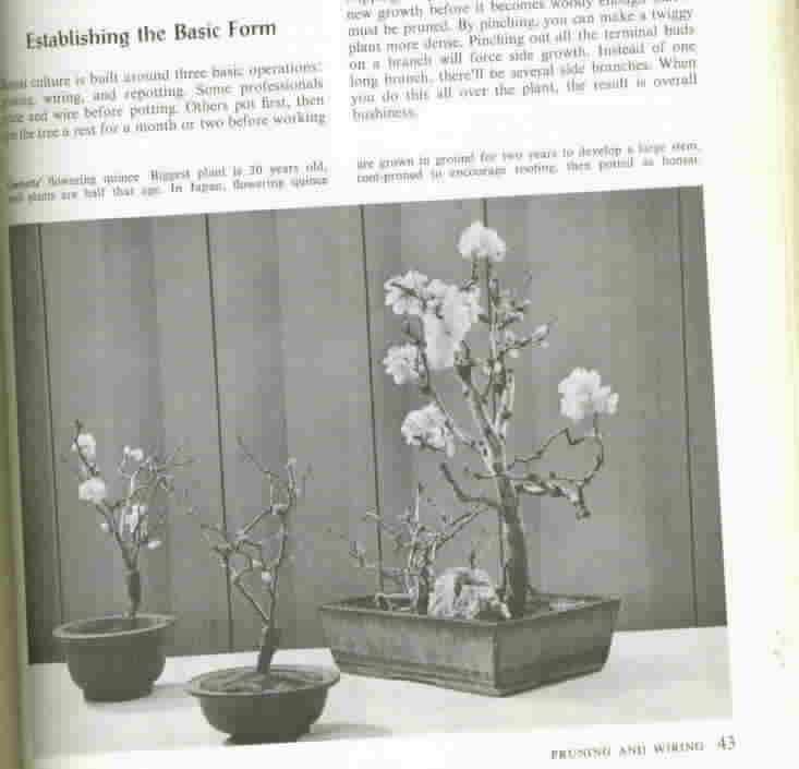 Vintage Bonsai Culture and Care of Miniature Trees, A Sunset Book
