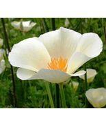 SHIPPED From US, 100 WHITE LINEN POPPY FLOWER SEEDS FREE SHIPPING POPPY ... - $16.99