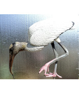 Wood Stork Lifesize 32 in. - $343.20