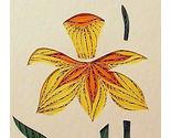 Daffodil2 thumb155 crop