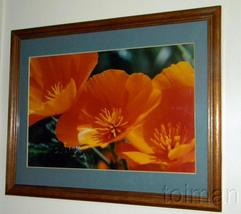 Hazel Rand photograph of California Poppies - Feb '96 Could be Peninsula... - $40.00