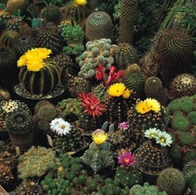 200 CACTI MIX- Seed, A very diverse assortment of cacti succulent -Peren... - $2.22