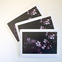 Spring Blossoms Notecards, Set of 3 - $8.00