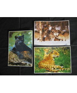 Wildlife Post Card 5 x 7 lot of 3 - $7.00