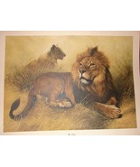 Charles Frace- Signed & numbered- Lions - $350.00
