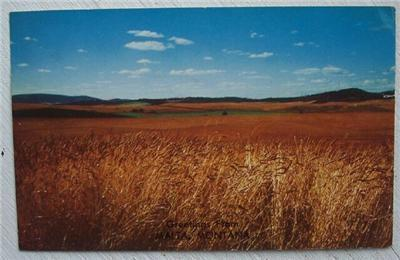 Primary image for 1950's PC Grain Field View Greetings from Malta Montana