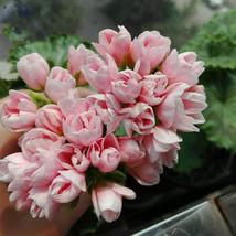 Geranium Light Peach Pink Ball Flower Seeds, 10 pcs Seeds/pack - $12.00