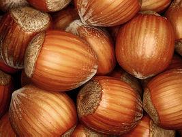 4 European Hazelnut (Filbert) Corylus avellana Tree Seeds (Edible Fall C... - $9.99
