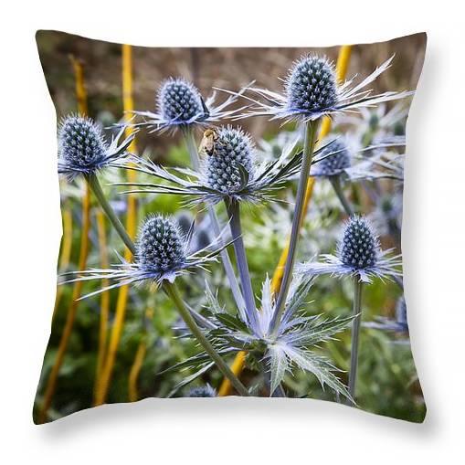 Blue stem sea holly pillow