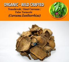 Giant Curcuma False Turmeric Temulawak Curcuma Zanthorrhiza Organic Wild... - $12.40+