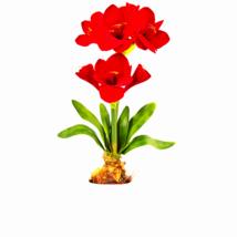 Silk Amaryllis Floral Arrangement - $54.64