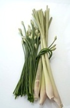 LEMONGRASS 1oz - SAMPLE Candle Fragrance FO - $2.25