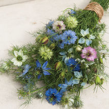 Love-In-A-Mist Nigella Seed, Love-In-A-Mist Nigella Flower Seeds - $21.00