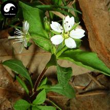 Buy Radix Pseudostellariae Seeds 120pcs Heterophylly Falsestarwort Tai Z... - $9.99