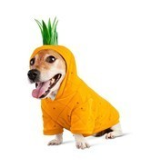 Bootique L Dog Hoodie Costume Pina Colada Pineapple Leash Port Halloween... - £19.46 GBP