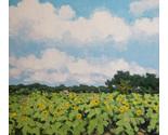 Field of sunflowers thumb155 crop
