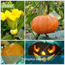 10pcs Pumpkin seed  Vegetable Seeds Bonsai Plants For Home Garden Non Gmo - $2.18