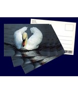 4 pcs. Mute Swan, Postcard Photographed and Printed in Denmark in the 1980s - $12.00