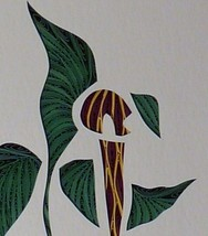 Quilled Jack-in-the-Pulpit - $175.00