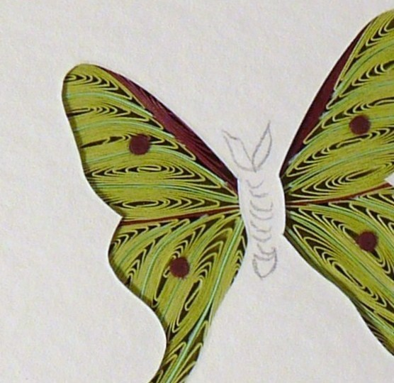 Tiny Quilled Luna Moth