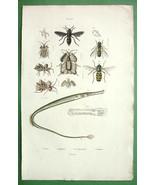 WASPS Fly Pipefish - SUPERB H/C Color Antique Print - $14.40