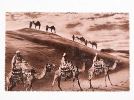Rare Vintage Egypt Postcard - Photograph Men on Camels - $7.25