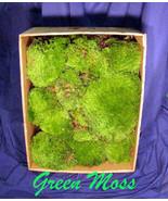 Mood Moss 1.5 cu ft Dry, Green - $40.00