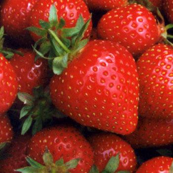 Strawberries & Champagne Soap & Perfume Oil Berrysweet Stuff Handmade