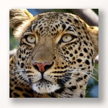 "24"" Stretched Canvas Leopard Head Print - Color Photo Print Close Up - $49.49"