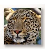 "Leopard Head Print 24"" Stretched Canvas  - Color Photo Print Close Up Af... - $39.49"