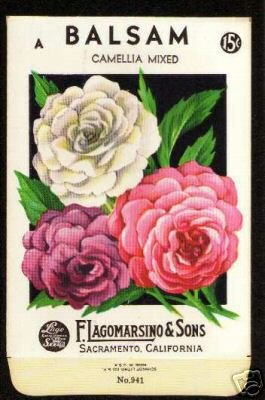 1920s Flower seed Packet Lago Balsam Camellia Mixed