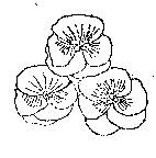 3 Pansy Flowers flower Rubber stamp Original artist sig
