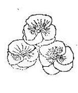 3 Pansy Flowers flower Rubber stamp Original artist sig - $7.00