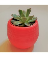 "Echeveria Succulent in Red Self-Watering Pot, Live E Pulidonis Plant, 3""... - $14.99"