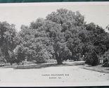 Oglethorpe oak 1 1 thumb155 crop
