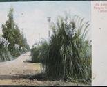 Pampas grass 1 1 thumb155 crop