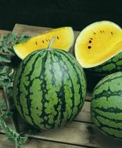 SHIPPED FROM US 18 Baby Doll Yellow Watermelon Fruit Seeds, JK05 - $16.72