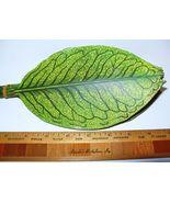 12 Vintage Millinery Flower Linen Oilcloth Leaf... - $9.29