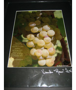 Art Photograph Signed Green Grape Cluster Napa Valley Veronica Tierney 8X10 - $24.63