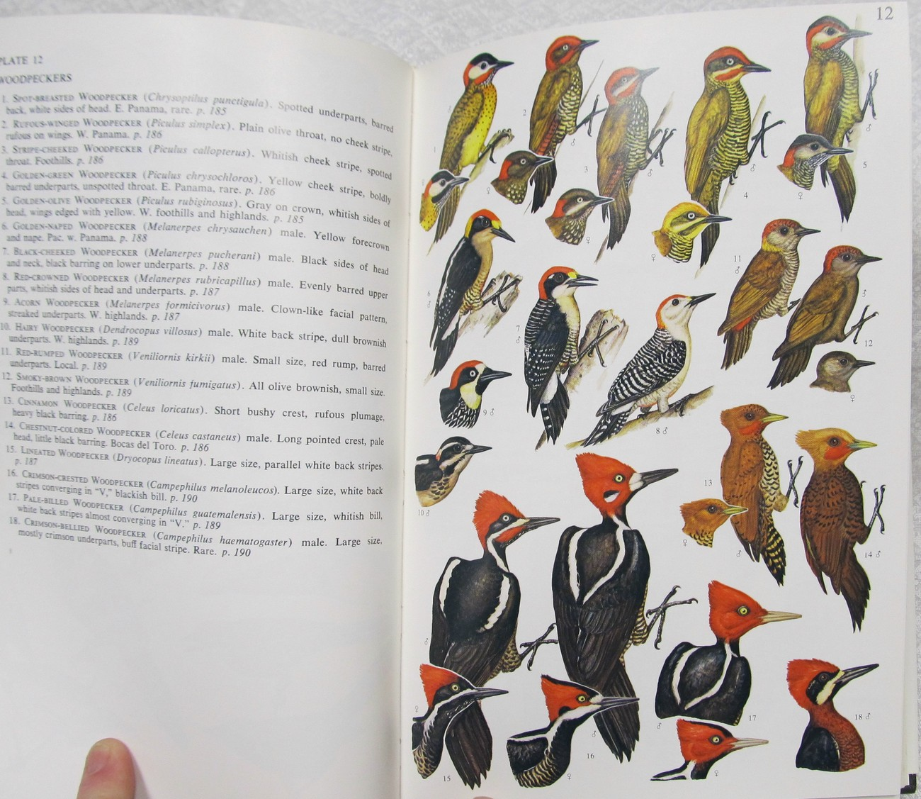 A Guide to the Birds Of Panama by Ridgely Robert