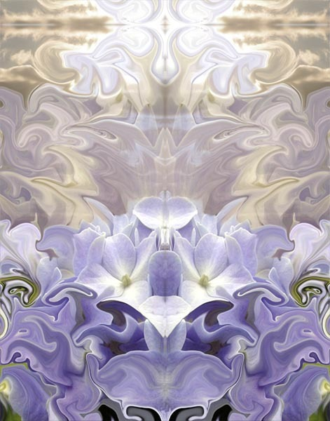 Glory, 11x14, Photo Based Digital Art, Hydrangea, Symmetry,