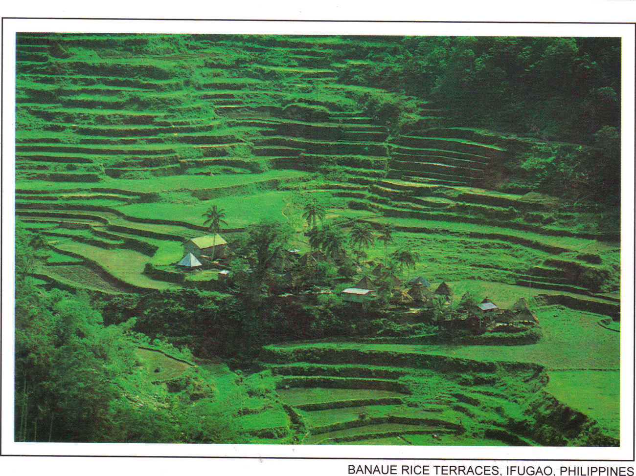 PHILIPPINES POSTCARDS, NEW: BANAUE RICE TERRACES, IFUGAO