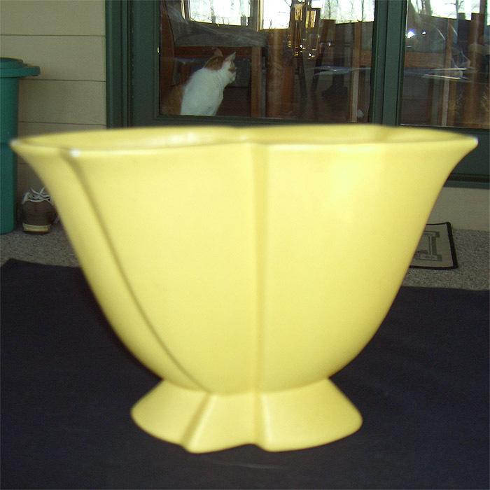 Hagar yellow