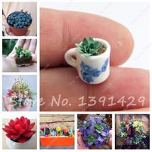 100 PCS Mini Succulent Seeds Rare Lithops Seeds Bonsai Flower Seeds Plan... - $7.98