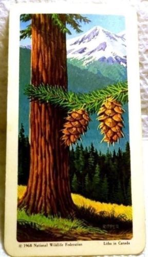 Trees of North America Tea Card #10 Near Mint Douglas Fir Red Rose 1968