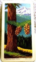 Trees of North America Tea Card #10 Near Mint Douglas Fir Red Rose 1968 - $1.89